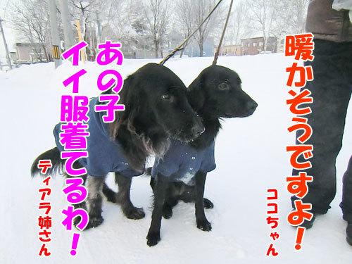 チャンスとティアラ+ココ-20121226-4-500.jpg