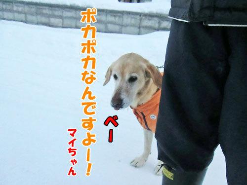 チャンスとティアラ+ココ-20121226-5-500.jpg