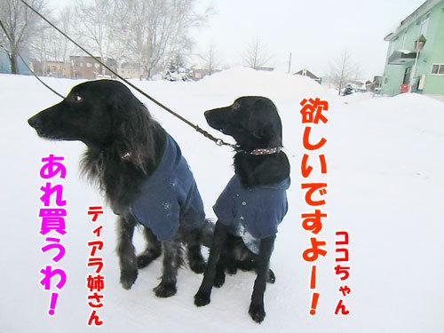 チャンスとティアラ+ココ-20121226-6-500.jpg