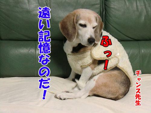 チャンスとティアラ+ココ-20121226-7-500.jpg