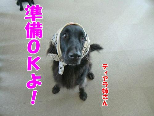 チャンスとティアラ+ココ-20121227-1-500.jpg