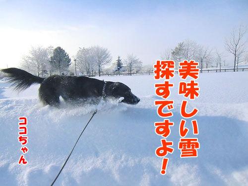 チャンスとティアラ+ココ-20121227-2-500.jpg