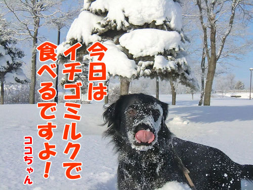 チャンスとティアラ+ココ-20121227-3-500.jpg