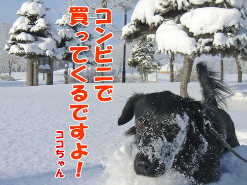 チャンスとティアラ+ココ-20121227-4-500.jpg