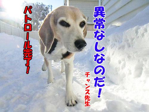 チャンスとティアラ+ココ-20121227-6-500.jpg