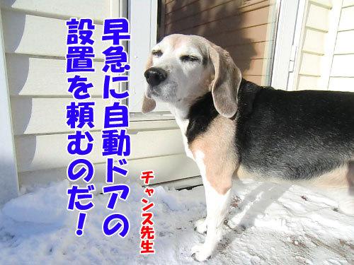 チャンスとティアラ+ココ-20121227-7-500.jpg