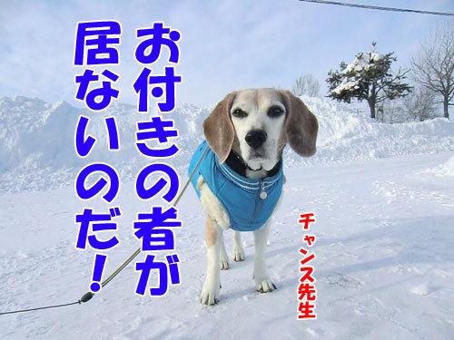 チャンスとティアラ+ココ-20121228-1-500.jpg