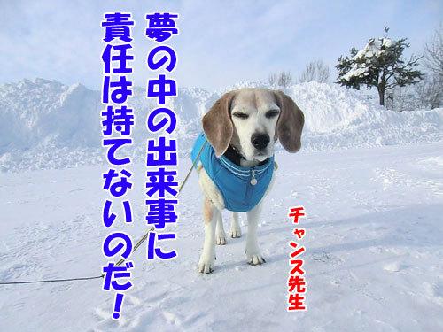 チャンスとティアラ+ココ-20121228-3-500.jpg