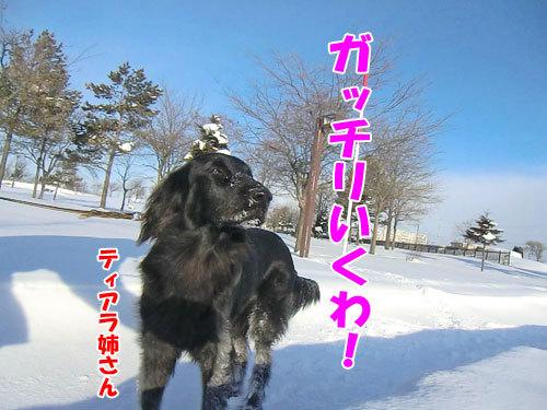 チャンスとティアラ+ココ-20121228-4-500.jpg