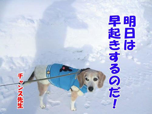 チャンスとティアラ+ココ-20121228-8-500.jpg