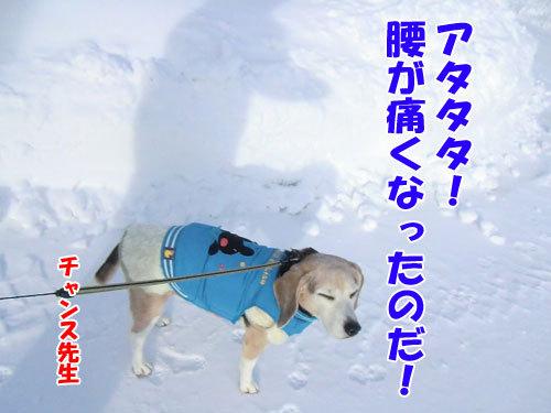 チャンスとティアラ+ココ-20121228-9-500.jpg