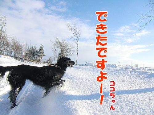 チャンスとティアラ+ココ-20121229-1-500.jpg