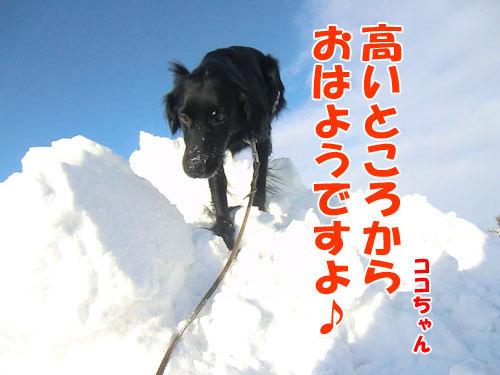 チャンスとティアラ+ココ-20121229-3-500.jpg
