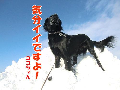 チャンスとティアラ+ココ-20121229-4-500.jpg