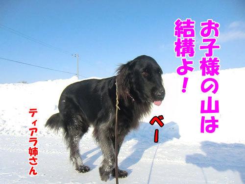 チャンスとティアラ+ココ-20121229-5-500.jpg