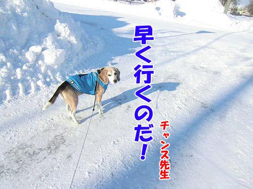 チャンスとティアラ+ココ-20121229-6-500.jpg