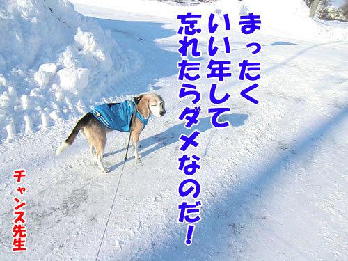チャンスとティアラ+ココ-20121229-7-500.jpg