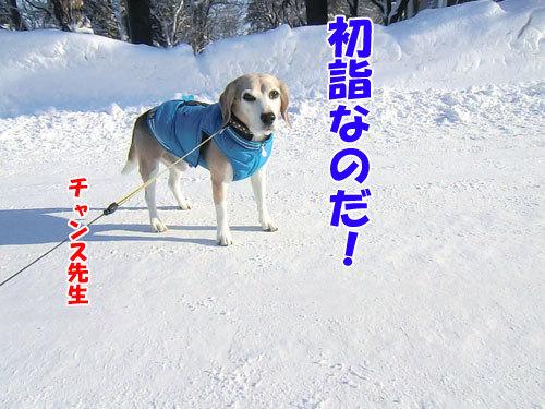 チャンスとティアラ+ココ-20121229-8-500.jpg