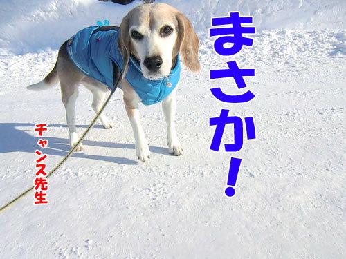 チャンスとティアラ+ココ-20121229-9-500.jpg