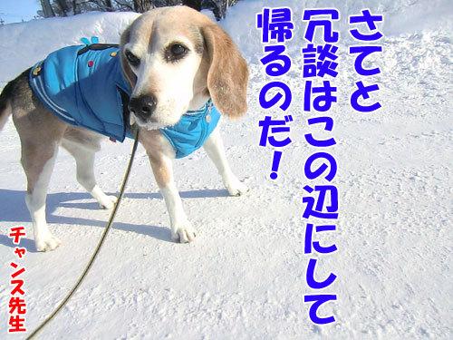 チャンスとティアラ+ココ-20121229-10-500.jpg