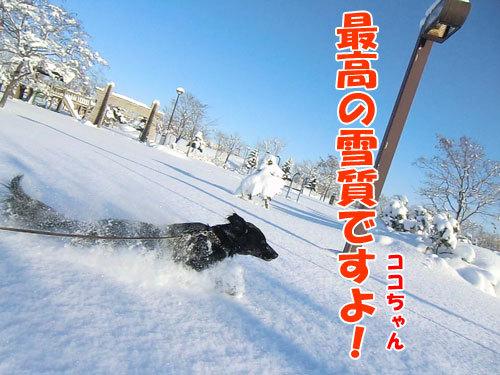 チャンスとティアラ+ココ-20121230-1-500.jpg