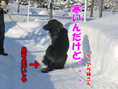 チャンスとティアラ+ココ-20121230-2-500.jpg