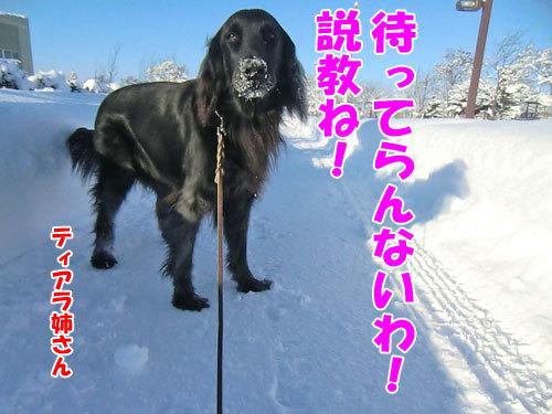 チャンスとティアラ+ココ-20121230-3-500.jpg