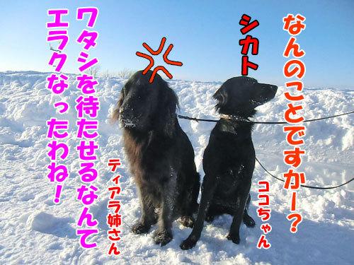 チャンスとティアラ+ココ-20121230-4-500.jpg