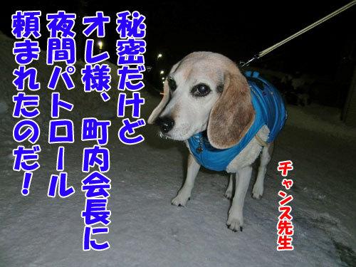 チャンスとティアラ+ココ-20121230-6-500.jpg