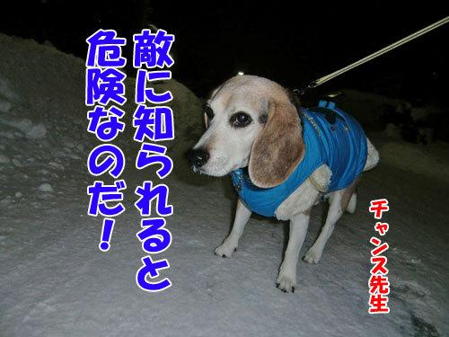 チャンスとティアラ+ココ-20121230-7-500.jpg