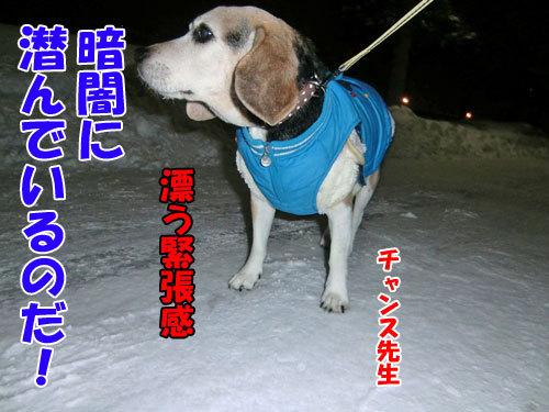 チャンスとティアラ+ココ-20121230-8-500.jpg