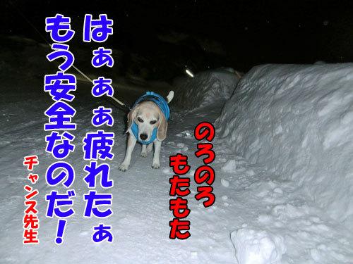 チャンスとティアラ+ココ-20121230-9-500.jpg