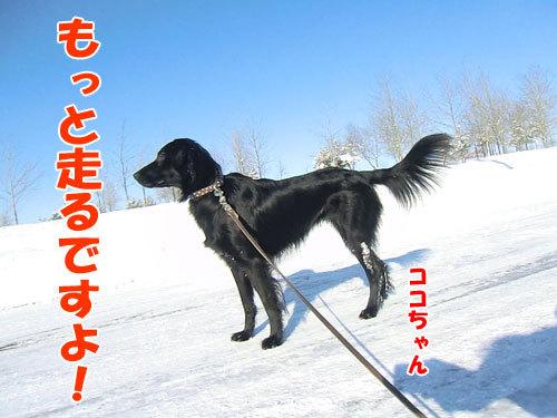 チャンスとティアラ+ココ-20121231-2-500.jpg