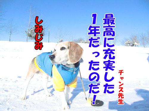 チャンスとティアラ+ココ-20121231-3-500.jpg