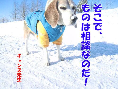 チャンスとティアラ+ココ-20121231-4-500.jpg