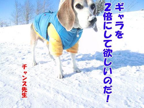 チャンスとティアラ+ココ-20121231-5-500.jpg
