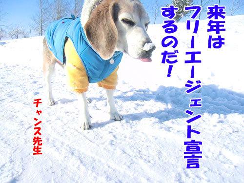 チャンスとティアラ+ココ-20121231-6-500.jpg
