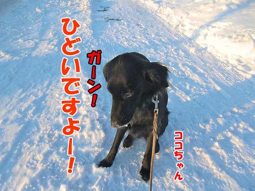 チャンスとティアラ+ココ-20130110-4-500.jpg