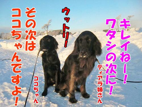 チャンスとティアラ+ココ-20130110-5-500.jpg