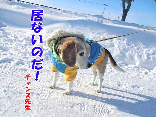 チャンスとティアラ+ココ-20130110-7-500.jpg