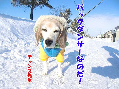 チャンスとティアラ+ココ-20130110-8-500.jpg