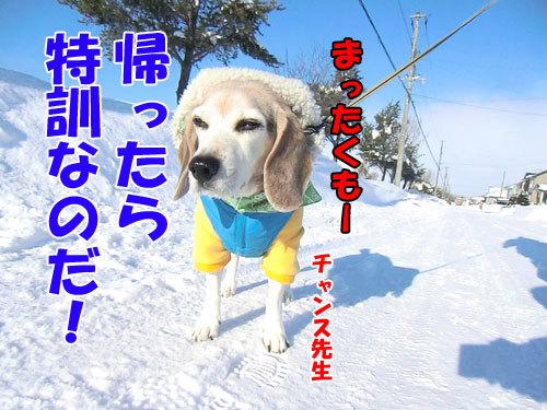 チャンスとティアラ+ココ-20130110-9-500.jpg