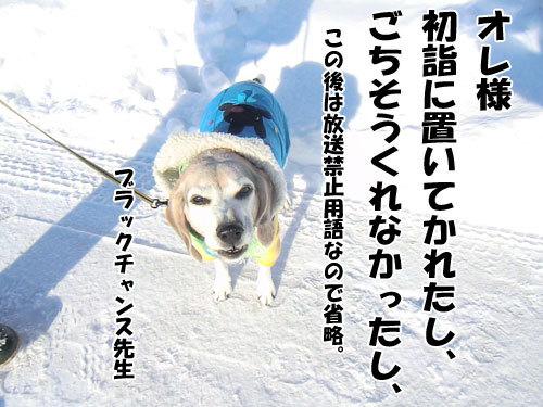 チャンスとティアラ+ココ-20130114-8-500.jpg