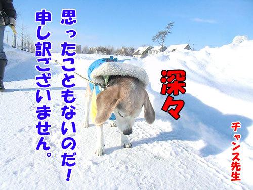 チャンスとティアラ+ココ-20130114-10-500.jpg