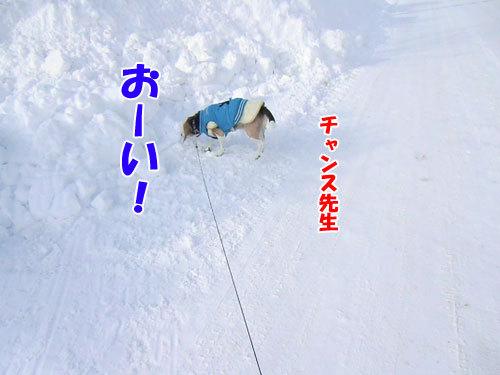 チャンスとティアラ+ココ-20130123-5-500.jpg