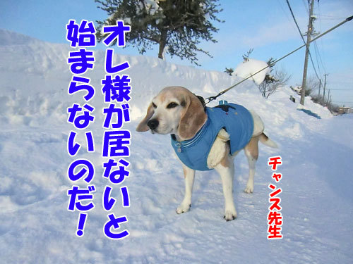 チャンスとティアラ+ココ-20130124-2-500.jpg