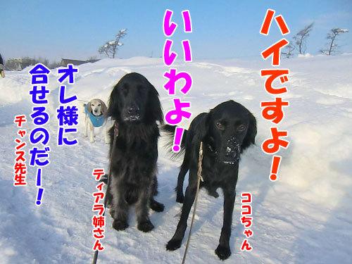 チャンスとティアラ+ココ-20130124-3-500.jpg