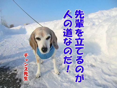 チャンスとティアラ+ココ-20130124-4-500.jpg