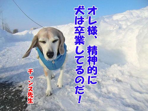 チャンスとティアラ+ココ-20130124-5-500.jpg