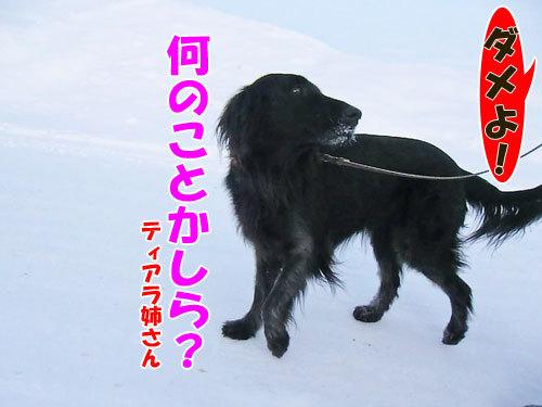 チャンスとティアラ+ココ-20130125-3-500.jpg